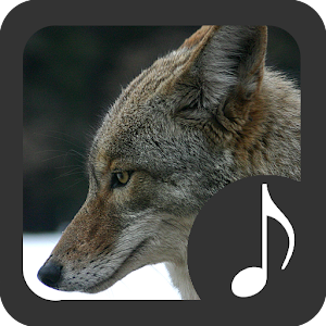 coyote sounds android free app store. Black Bedroom Furniture Sets. Home Design Ideas