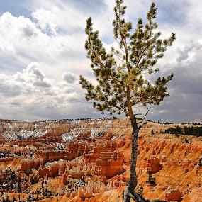 Bryce Canyon - L'arbre sous ciel d'orage by Gérard CHATENET - Landscapes Caves & Formations
