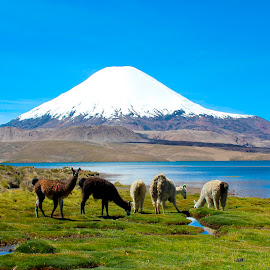 Chungara Lake, Chile by Kurt Van Wagner - Landscapes Travel ( andes, chile, volcano, south america, lakes,  )