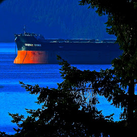 Tiger in the Forest by Campbell McCubbin - Transportation Boats ( ship, trees, bulk carrier, ocean, frieghter, orange tiger )
