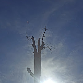 Into the sun by Molly Swoboda - Instagram & Mobile Android ( bright, beams, standing, sun, dead tree )