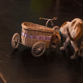 Inspecting the cart by Vijay Rawale - Animals - Cats Playing ( playing, cat cafe studio, cat, candid moment, cart )
