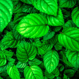 Go Green by Emms Ismail - Nature Up Close Leaves & Grasses ( green, nature up close )