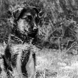 by Dario Marusic - Animals - Dogs Portraits