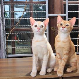 utih uning by Kanda Ridho - Animals - Cats Kittens ( #cats #catsoftheday )