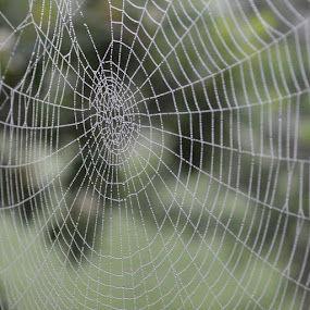 by David Lovingood - Nature Up Close Webs
