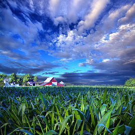 Country Living by Phil Koch - Landscapes Prairies, Meadows & Fields ( vertical, farmland, travel, yellow, leaves, crop, love, sky, barn, nature, tree, weather, perspective, flowers, light, orange, art, twilight, agriculture, journey, horizon, portrait, environment, dawn, season, serene, trees, lines, natural, hope, inspirational, wisconsin, ray, joy, country living, beauty, landscape, phil koch, spring, sun, corn, photography, farm, life, horizons, inspired, clouds, office, park, heaven, green, beautiful, scenic, morning, shadows, field, red, blue, sunset, amber, peace, meadow, summer, beam, earth, sunrise, garden,  )