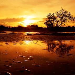 by Taufiqurakhman Ab - Landscapes Sunsets & Sunrises