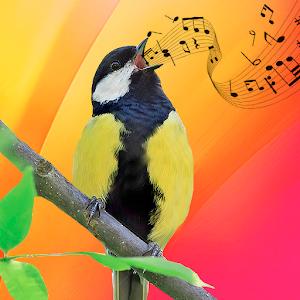 Best Birds Ringtones & Bird Sounds 2020 Online PC (Windows / MAC)