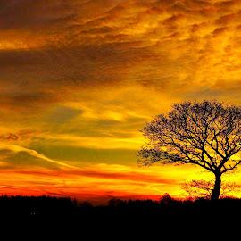 tree of life by Kim Moeller Kjaer - Landscapes Sunsets & Sunrises