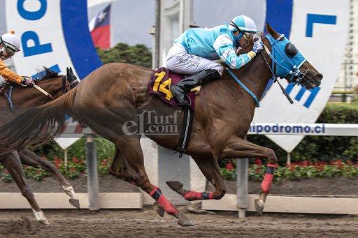 Semper Fi (Passion for Gold) brilla en Handicap (1000m-Arena-HCH). - Staff ElTurf.com