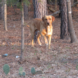 Max by David Mata - Animals - Dogs Playing