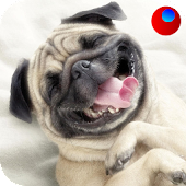 Dog Sounds APK for Bluestacks