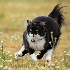 by Rick W - Animals - Cats Playing