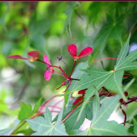 Whirligig Flower by Mina Thompson - Nature Up Close Trees & Bushes ( oregon, whirligig, nature, tree, blossom )