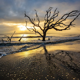 Driftwood Beach by David Long - Landscapes Beaches ( jekyl island, driftwood beach, south carolina )