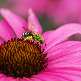 Metallic Green Bee by Andrew Boyd - Uncategorized All Uncategorized