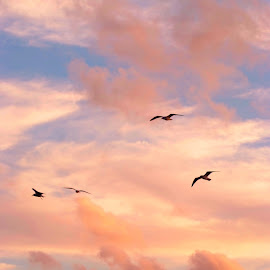 Heavenly clouds by Brenda Shoemake - Landscapes Cloud Formations