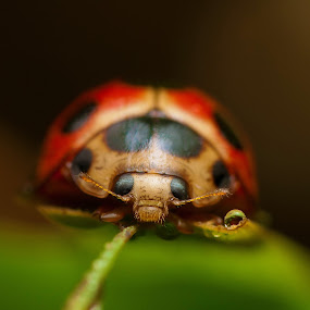 I AM BUG by Ak Pak Belang Sopan - Animals Insects & Spiders