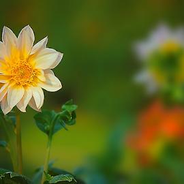 by DODY KUSUMA  - Flowers Single Flower