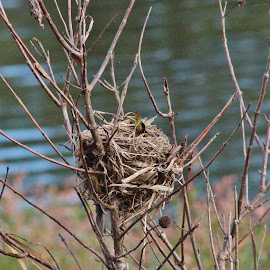 Bird Nest by Terry Linton - Nature Up Close Hives & Nests