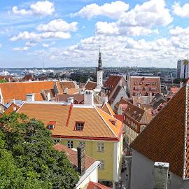 Tallinn Skyline by Dee Haun - City,  Street & Park  Skylines ( estonia, skyline, multifaceted roofs, tallinn, city,  )
