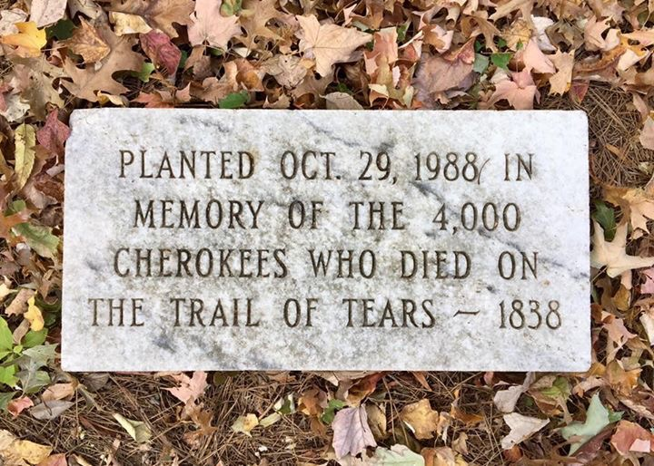 PLANTED OCT. 29, 1988 IN MEMORY OF THE 4,000 CHEROKEES WHO DIED ON THE TRAIL OF TEARS 1838