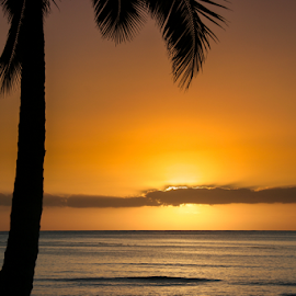 Waikiki Sunset by Briand Sanderson - Landscapes Sunsets & Sunrises ( palm, palm tree, palm leaves, sunset, honolulu, oahu, hawaii, waikiki )