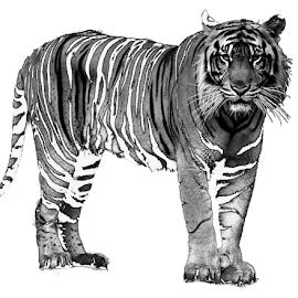 Wounded by Yohanes Arief Dewanto - Digital Art Animals ( wild, wilderness, tiger, digital art, animal )