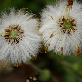 by Terry Herndon - Nature Up Close Other plants