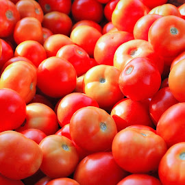 Up for sale from the farm.. by Anoop Namboothiri - Nature Up Close Gardens & Produce ( farm, tomato, anoop namboothiri, harvest,  )