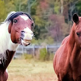 I'm going first! by Sue Delia - Animals Horses ( horses, teeth,  )