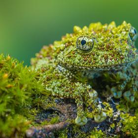 frogshooting-133.jpg
