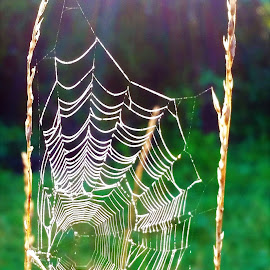 by Peter Rippingale - Nature Up Close Webs