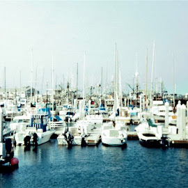 Monterey, CA by Sarah Farber - Transportation Boats