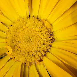 Heart of a flower by Kuheli Chaudhuri - Nature Up Close Other Natural Objects