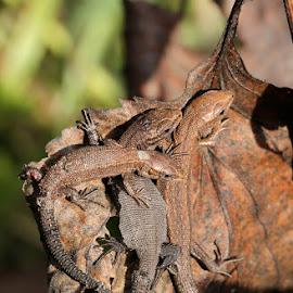 by Teija Kukkonen - Animals Amphibians
