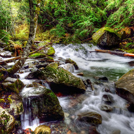 Waterfall #4 by Kent Moody - Landscapes Waterscapes ( washington, stream, national park, creek, waterfall, rocks, mount rainer )