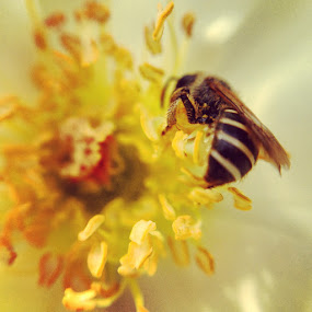 Bee by Bradley Francis - Instagram & Mobile iPhone