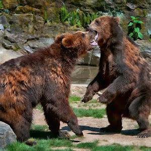 Bears 001.jpg