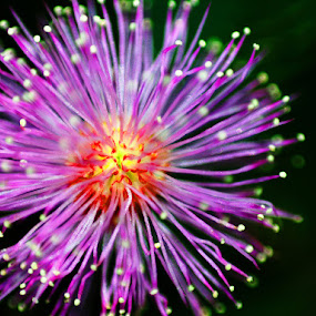 Fireworks! by Charles Liban Jr - Nature Up Close Flowers - 2011-2013 ( macro, nature, flowers )