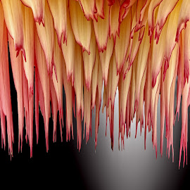 DPC 31 by Michael Moore - Digital Art Abstract