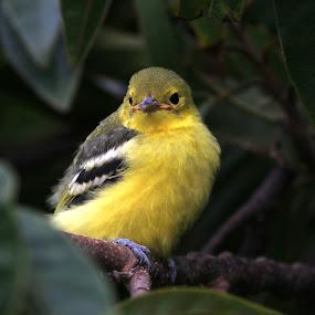 TINY BIRD by Prakash Tantry - Animals Birds ( tiny, color, waiting, beautiful, natural,  )