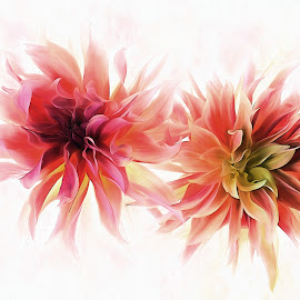 Dahlia Dream by CLINT HUDSON - Digital Art Things