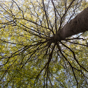 Leaf by Katie Woolwine - Novices Only Abstract ( pwccurves, abstract, life, tree, nature, green )