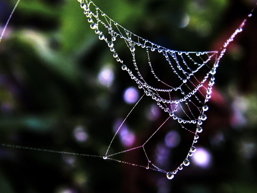 winter's ornament by Prasanta Kumar Sur - Nature Up Close Webs