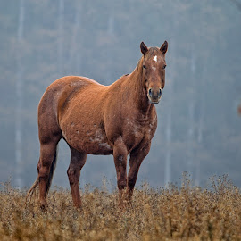 Burnt Orange Autumn by Twin Wranglers Baker - Animals Horses (  )