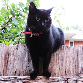 by Clare Draper - Animals - Cats Portraits ( black, eyes )