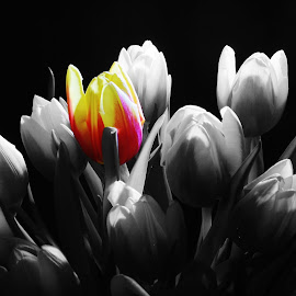 colour in black and white by Peter Salmon - Artistic Objects Other Objects ( colour, tulip, white, flowers, black )