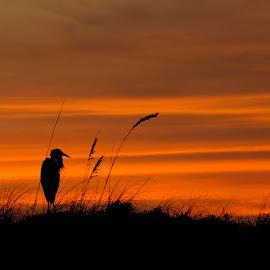 by Shawn Thomas - Landscapes Sunsets & Sunrises
